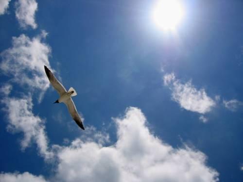 Стихия Воздух. Стихийная магия. Обряды. Ритуалы. Путь Ведьмы Воздуха S3103769