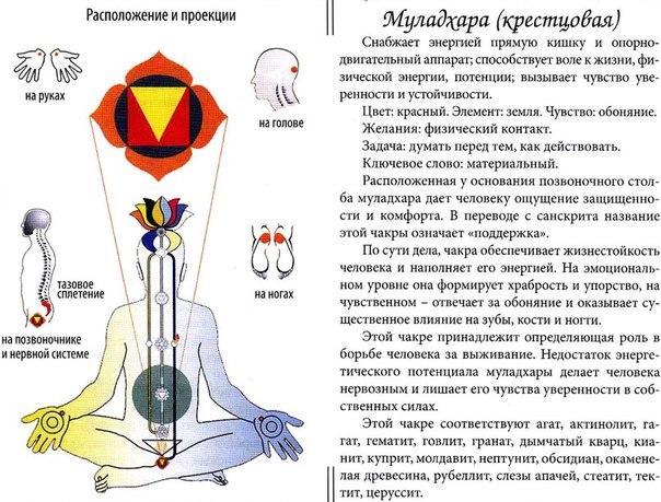 Описание клеток Лилы, подробное значение божественной игры
