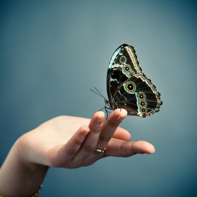 рука ловящая бабочек